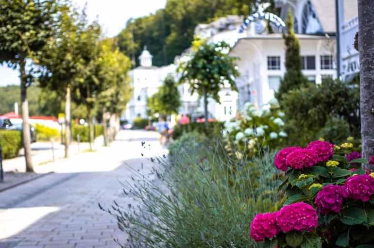 Fleurs bordant les villas de Binz, sur l'île de Rügen