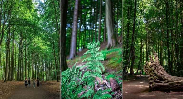 Parc de Jasmund, Allemagne, détails de la forêt