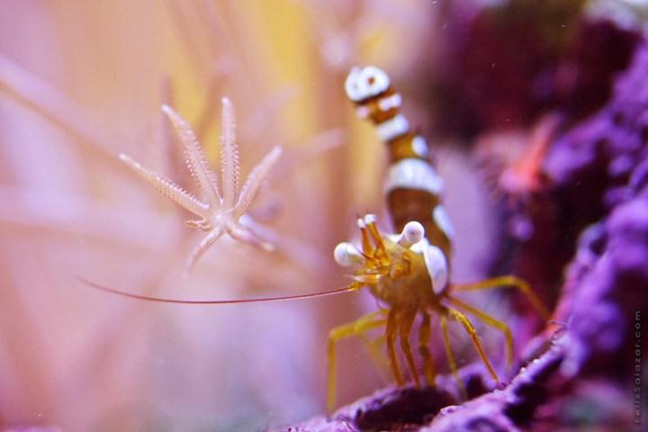 macro-corals-reef-felix-salazar11