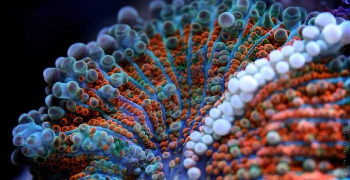 macro-corals-reef-felix-salazar2