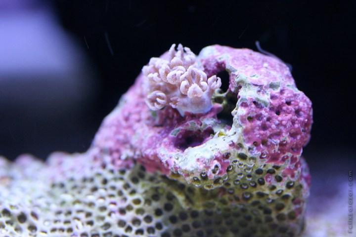 macro-corals-reef-felix-salazar9
