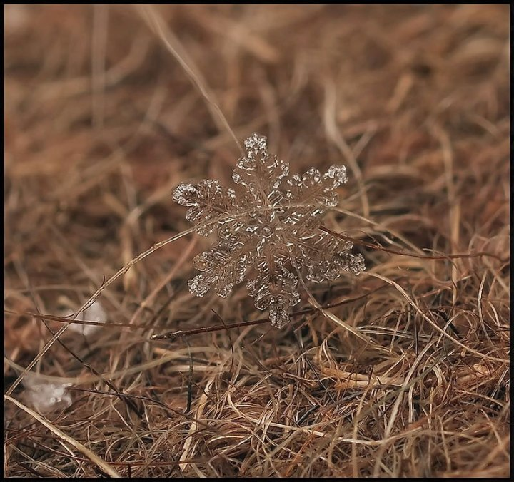 macro-photograph-of-a-snowflake-by-andrew-osokin-10