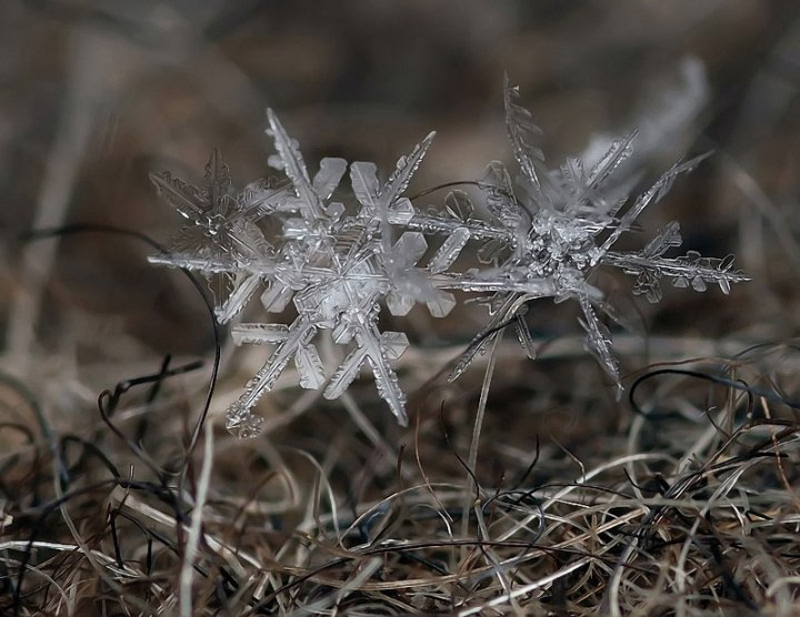 macro-photograph-of-a-snowflake-by-andrew-osokin-2