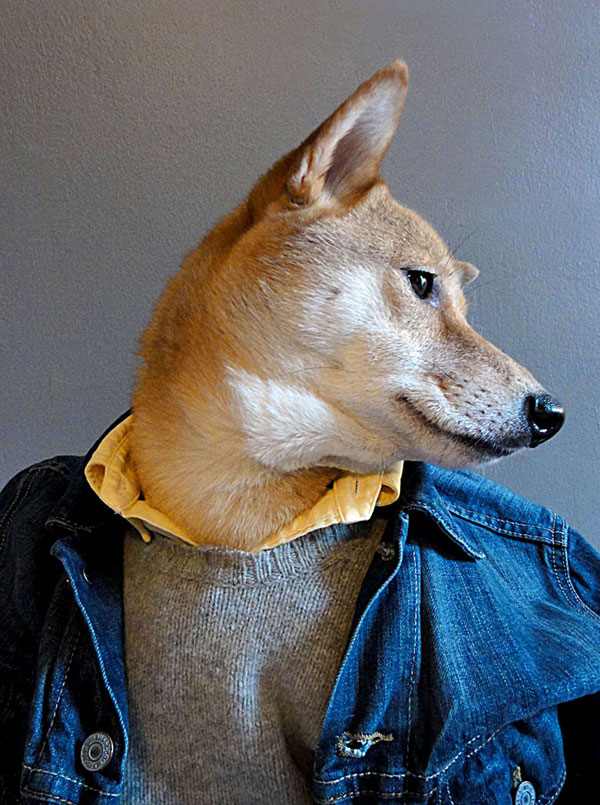 menswear-dog-dressed-in-clothes-fashion-look-book-3