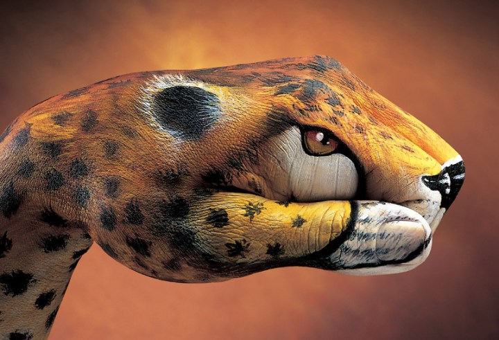Cheetah-20011