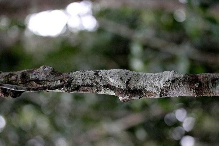 animal-camouflage-17
