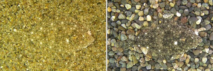 Amazing Examples Of Animal Camouflage 18 Pictures