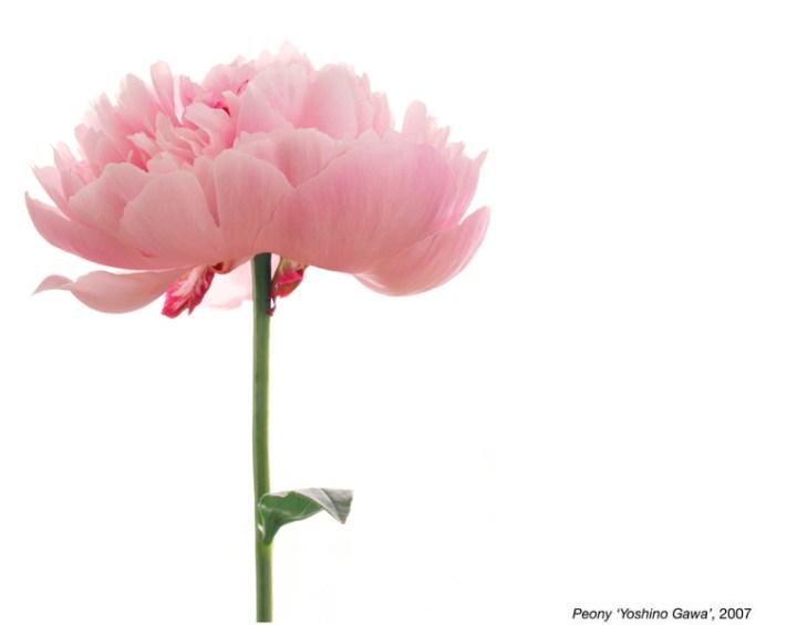 flowerimg_11