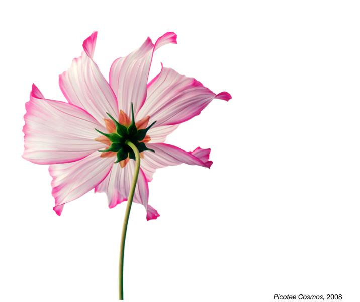 flowerimg_12