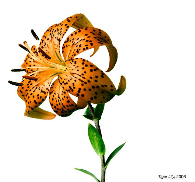 flowerimg_18