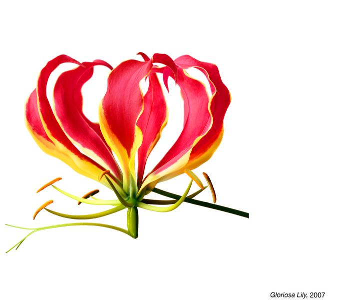 flowerimg_25