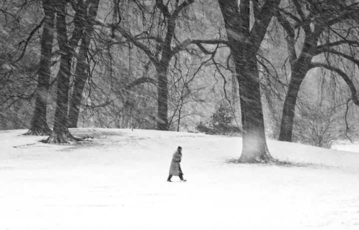 blizzard9
