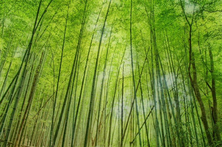 Bamboo-woods-in-Japan
