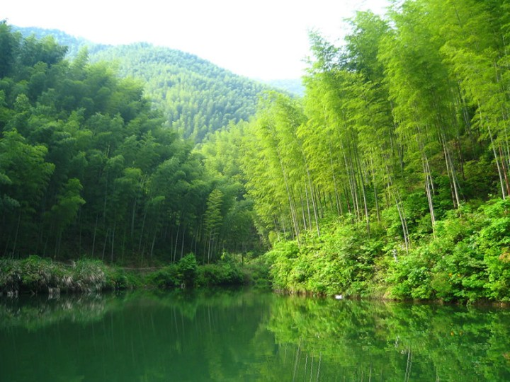 Water-and-mountains-entering-the-bamboo-forest