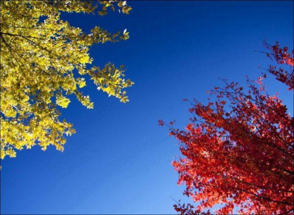barwy_jesieni_1