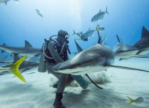 incredible_moment_shark_whisperer_hypnotises_deadly_shark_15_minutes_01