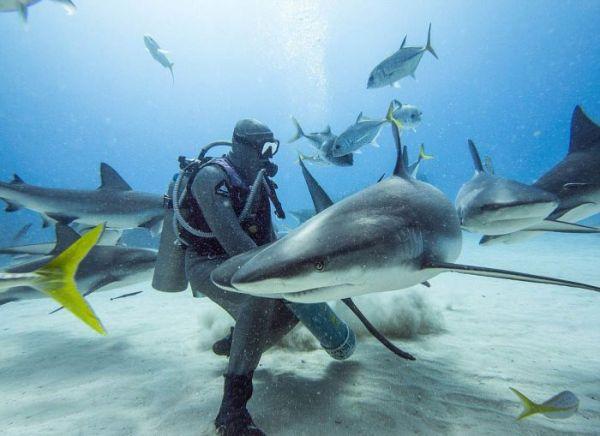 incredible_moment_shark_whisperer_hypnotises_deadly_shark_15_minutes_01