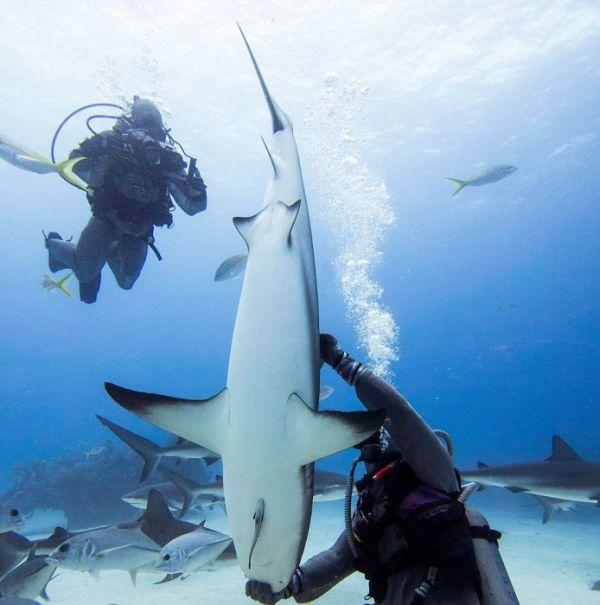 incredible_moment_shark_whisperer_hypnotises_deadly_shark_15_minutes_07