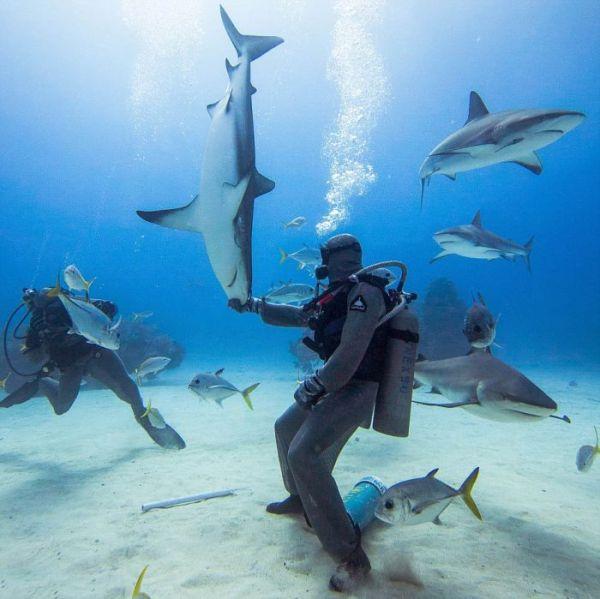 incredible_moment_shark_whisperer_hypnotises_deadly_shark_15_minutes_08