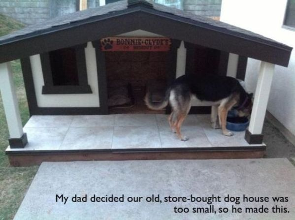 pet_owners_who_should_get_medals_for_being_awesome_06