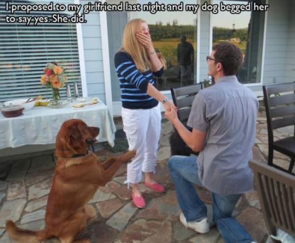 pet_owners_who_should_get_medals_for_being_awesome_08