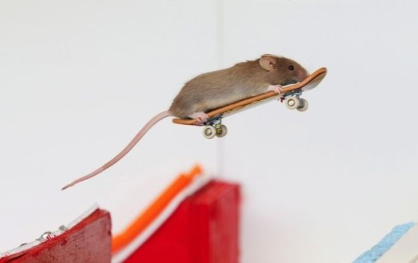 you_have_to_see_these_pictures_of_skateboarding_mice_03