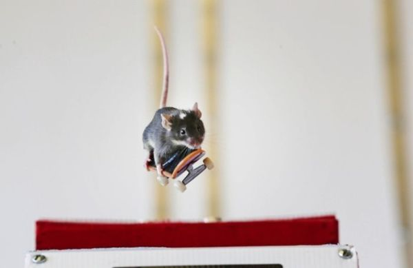you_have_to_see_these_pictures_of_skateboarding_mice_04
