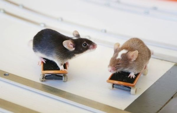 you_have_to_see_these_pictures_of_skateboarding_mice_06