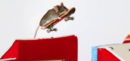 you_have_to_see_these_pictures_of_skateboarding_mice_08