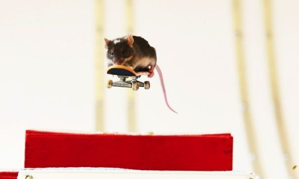 you_have_to_see_these_pictures_of_skateboarding_mice_15