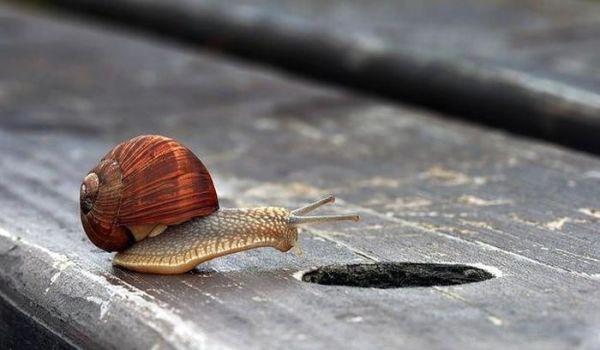amazing-macro-photography-18