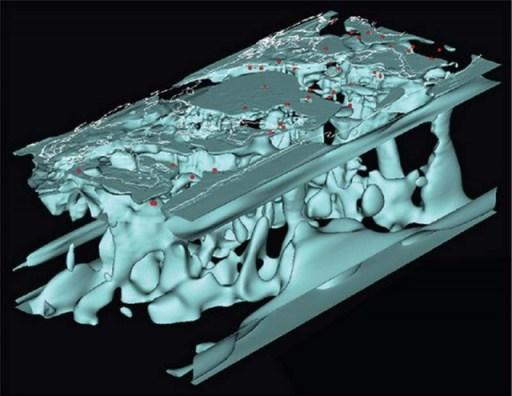 This three-dimensional image displays contours of locations where seismic wave speeds are faster than average.  Image courtesy of Ebru Bozdağ, University of Nice Sophia Antipolis, and David Pugmire, Oak Ridge National Laboratory