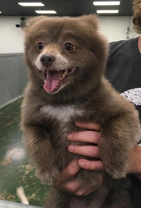 bear-dogs-29__605