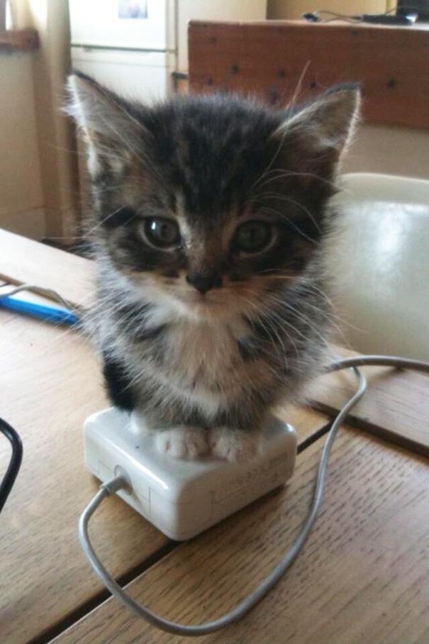 cats-enjoying-warmth-391__605