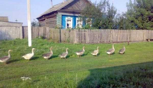 russian-village-funny-pics-10