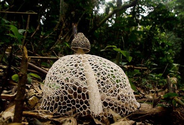 mushroom-photography-101__880
