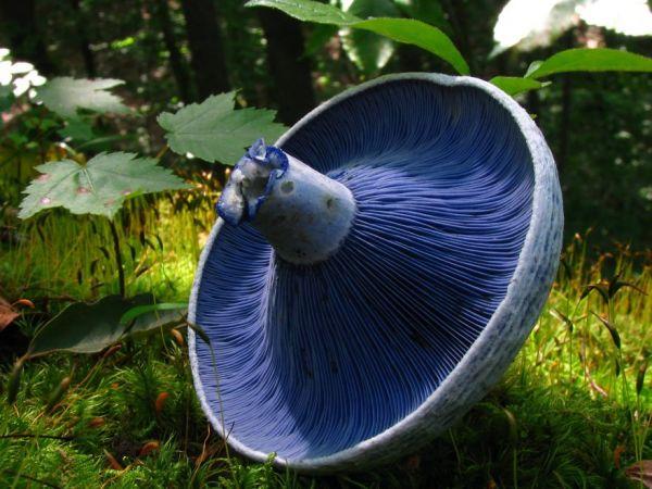 interesting-mushroom-photography-104__880