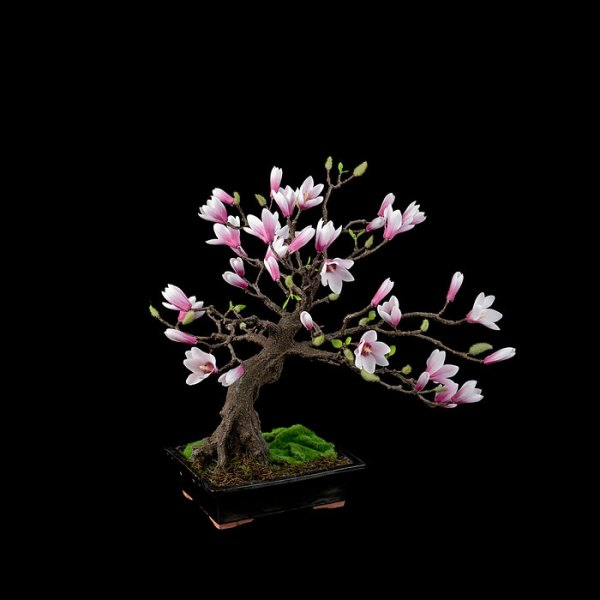 amazing-bonsai-trees-7-5710e7a153003__700