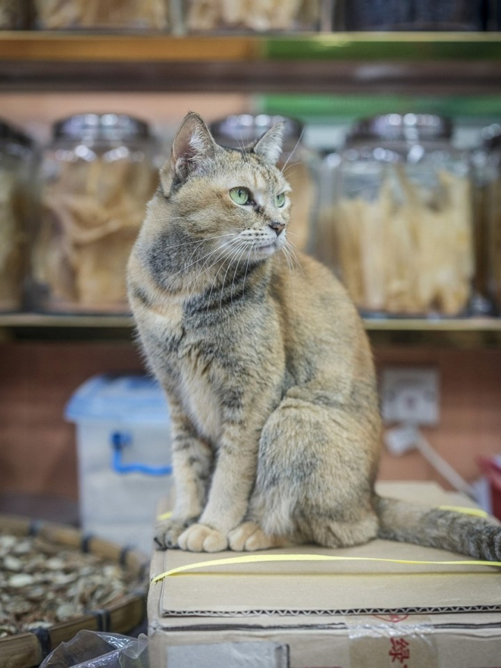 shop-cats-photography-marcel-heijnen-hong-kong-18-5809cd7bdd37c__880
