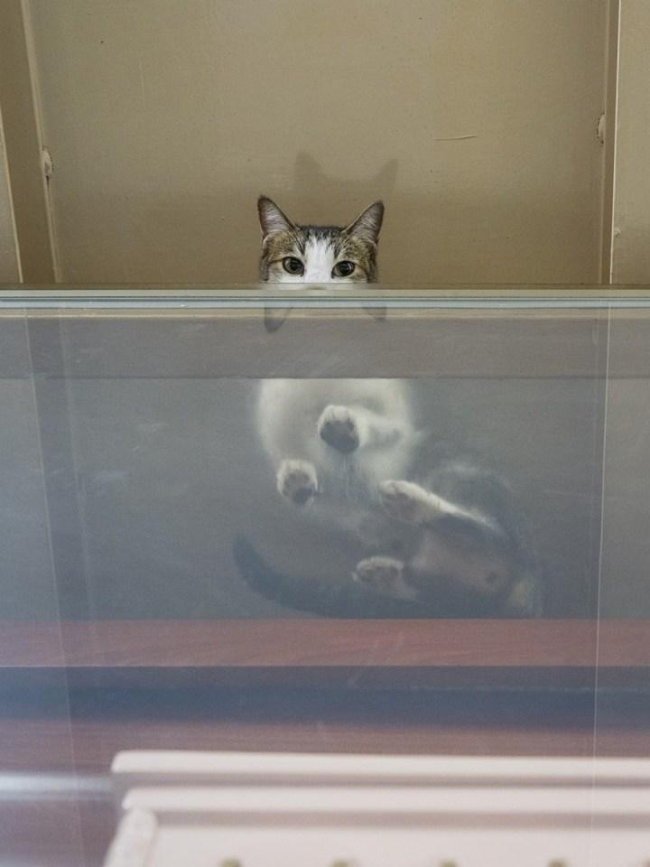 shop-cats-photography-marcel-heijnen-hong-kong-33-5809cdabdc877__880