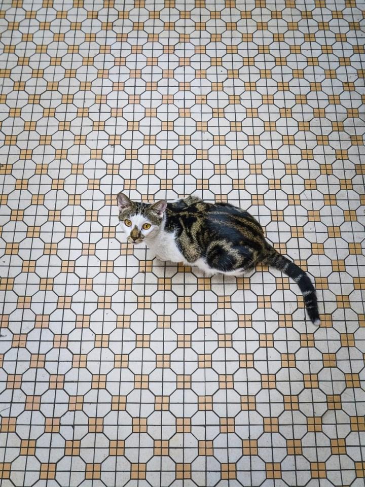 shop-cats-photography-marcel-heijnen-hong-kong-36-5809cdb4dd805__880