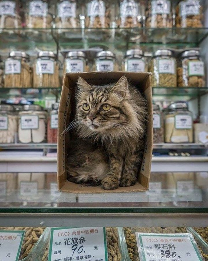 shop-cats-photography-marcel-heijnen-hong-kong-46-5809d3ae4c525__880