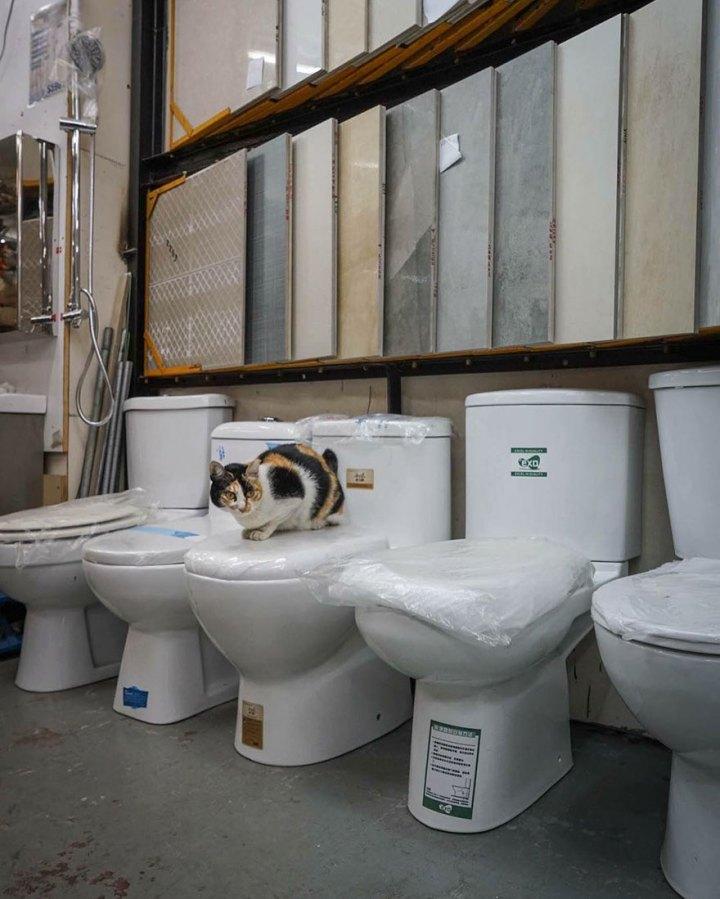 shop-cats-photography-marcel-heijnen-hong-kong-47-5809d3bfab2e3__880