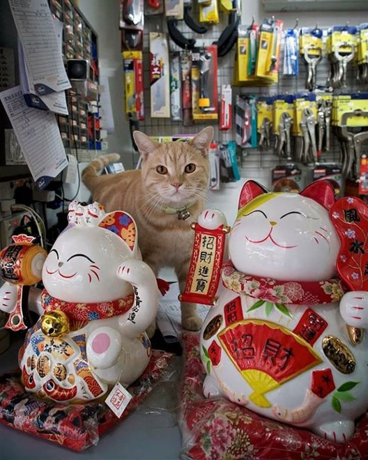 shop-cats-photography-marcel-heijnen-hong-kong-48-5809d3d043631__880