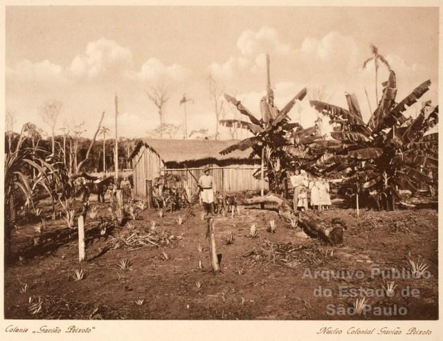 Fotografía 8. Construcciones rurales para los campesinos en Brasil. (Álbum Vistas de São Paulo, circa 1900, pág. 95)