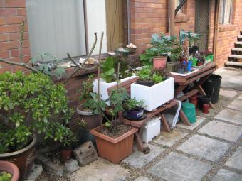 Growing veggies in pots 2009