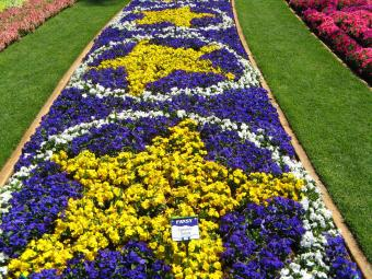 Beds of colour