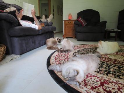 Malanda and cats 052_4000x3000