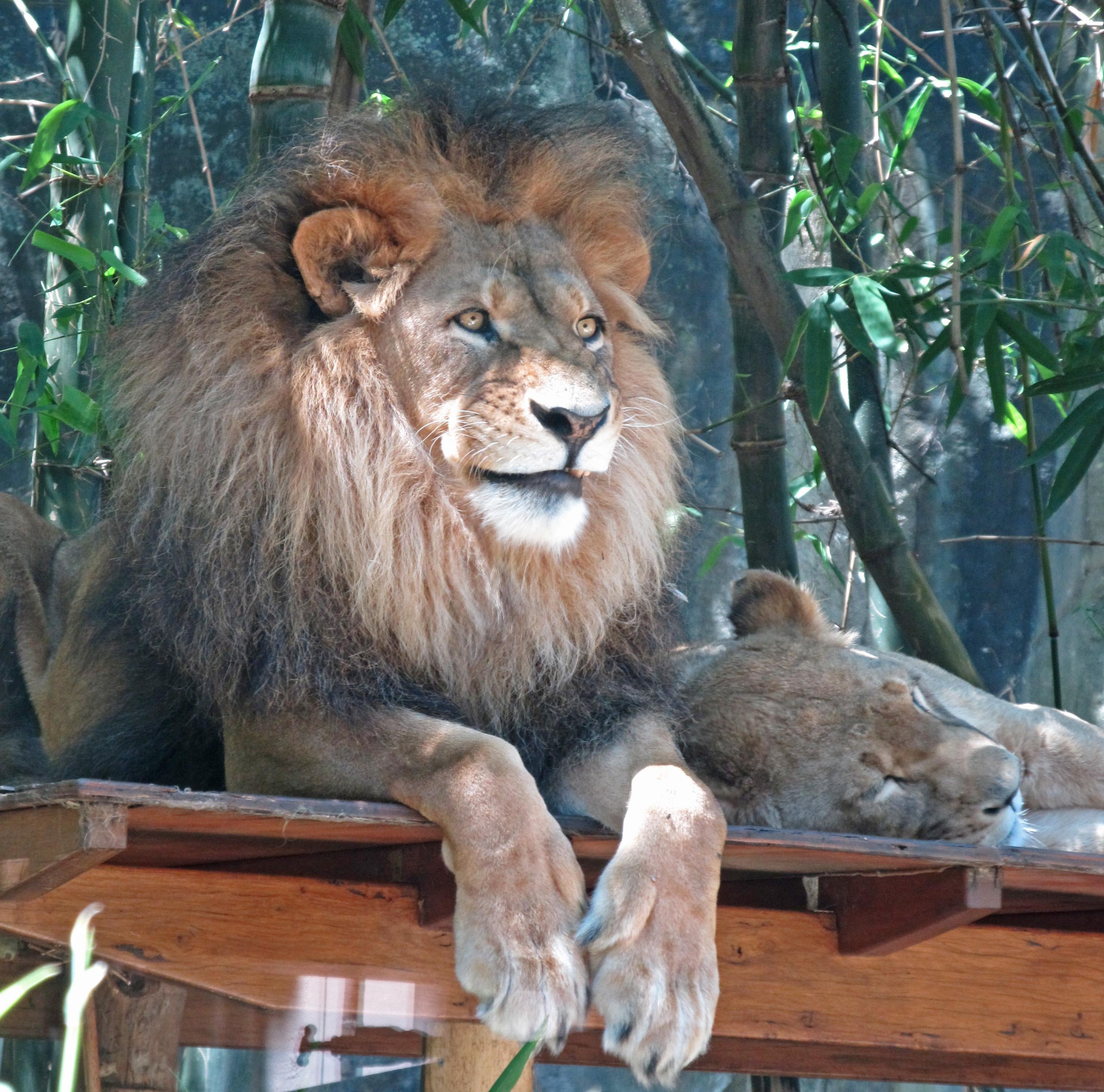 Taronga Zoo 149