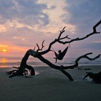 Driftwood Beach- Jekyll Island, GA